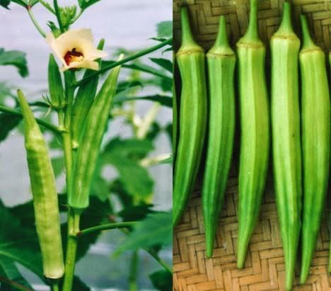 mua hạt giống rau đậu bắp